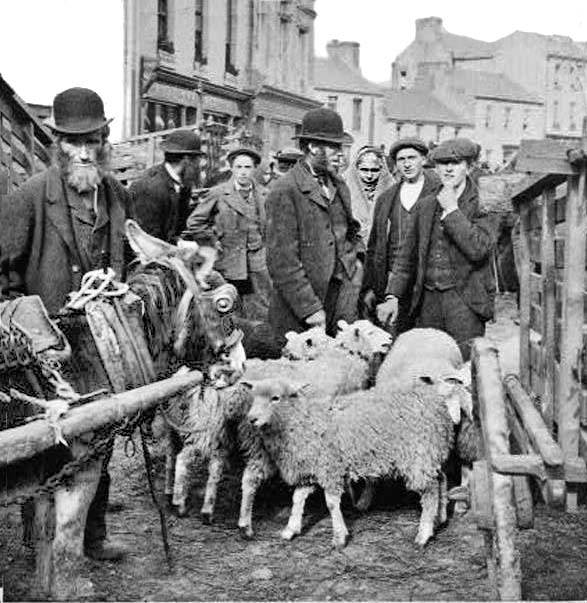 Killarney sheep fair