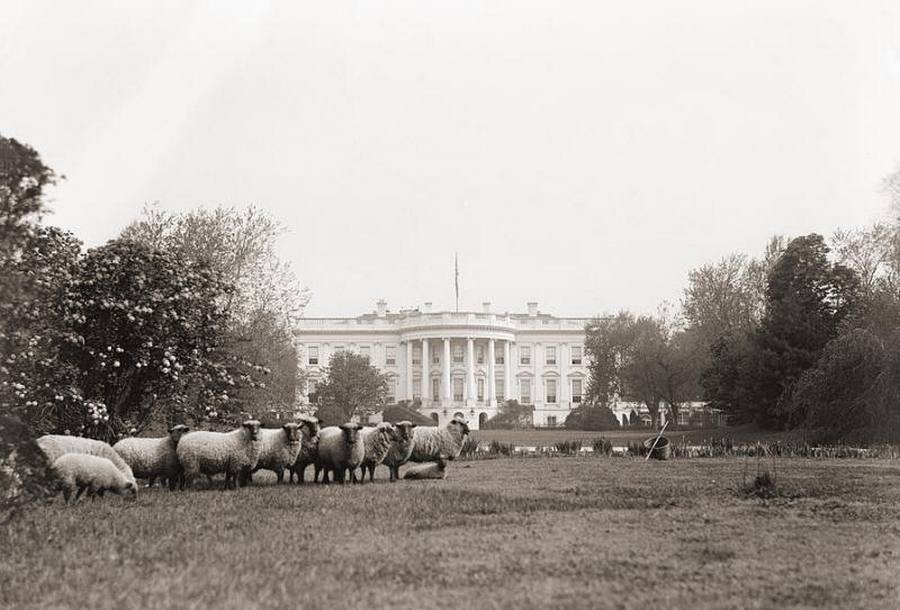 13 Lawn mowers of the White House grounds, 1918