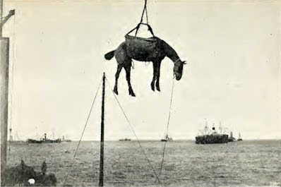 Horses being offloaded during the Anglo Boer War in Algoa Bay Port Elizabeth