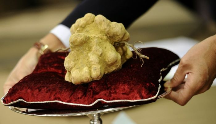 The most expensive mushroom in the world is an Italian White Alba Truffle. 1.51 kilograms is worth $160,406.