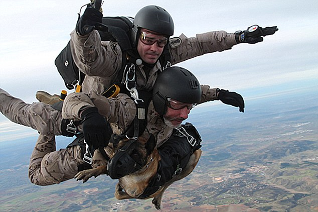 "Pic shows: The Spanish army is introducing the world's first tandem flight for dog and handler. The Spanish army is taking the term dogs of war to a new height after introducing the world's first tandem flight for dog and handler. Until now army dog trainers have had to go through specialist parachute training in order to jump from planes with their canine partners. But the new system in Spain involves an experienced Parachute Regiment officer jumping with the army dog handler and the dog. And in trials like this one at a drop zone of Santorcaz, in the centre Spanish region of Madrid, it worked perfectly, with both dog and handler being safely delivered to the ground by the professional parachutist. In the first jump a dog specialised in sniffing out explosives was able to leap out of the plane with its owner and a soldier from the Parachute Regiment. In the second jump another dog called Jimy specialised in tracking and attacking on command was involved. Both were securely strapped to their handler and with a muzzle to stop them damaging their mouths on landing. Spanish army spokesman XXXX said: ""both dogs were Belgian shepherds. The jump was made from a height of 10,000 feet and the tests proved that both dogs and handler can work properly after the freefall."" The idea of parachuting dogs is not anything unusual as these snaps taken at a cross-border parachuting dog training session in Norway in which the Austrian army was involved. The pictures as the explosives sniffing pooch - a member of Austria's version of the SAS - were taken as the plane and its handler out of the plane part in Operation Cold Response. Although the Austrian dogs seemed very cool his handler explained: ""They don't perceive height difference the same way humans do, so it doesn't worry them. They're more likely to be bothered by the roar of the engines, but once we're on the way down, that doesn't matter and they just enjoy the view."" He was also eager to point out that the dogs, like their human colleagues, are regarded as valued team members and aren't put into situations that could prove unnecessarily dangerous. (ends)"
