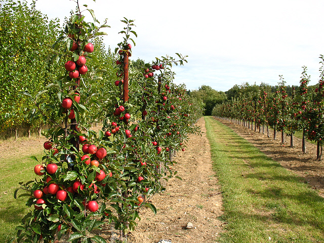 Gala apple orchards. Perhaps the EU wanted to lay a charge with the Aesthetic Committee which annoyed the Brits