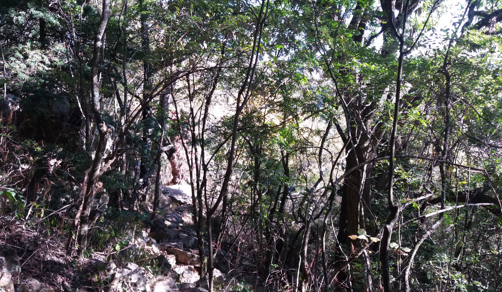 The Forest Section where Kurt was found