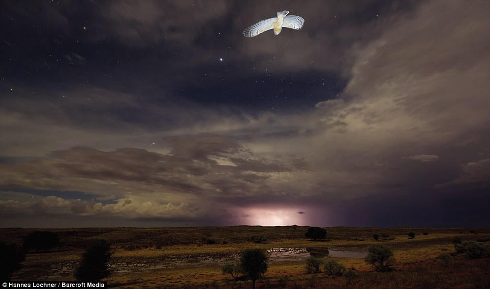 A single owl flews into a stunning night-time landscape of the Kalahari Desert, as lightning lit up the horizon