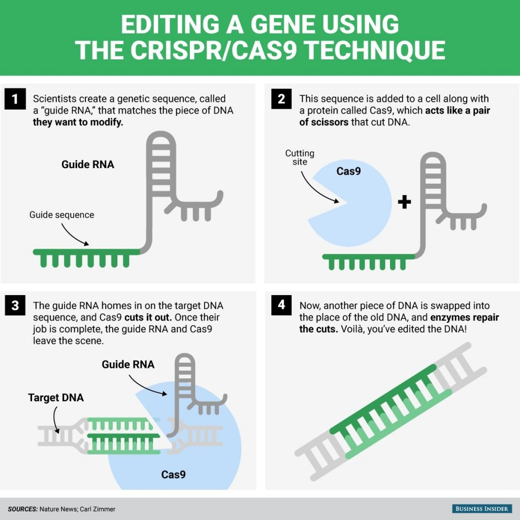 Editing a gene using the CRISPR technique