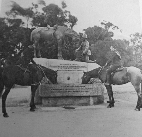 Horses actually drinking at the Horse Memorial
