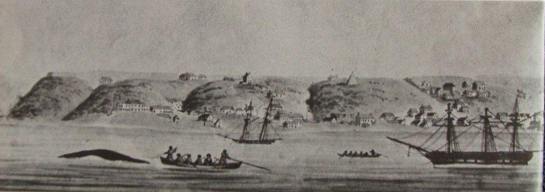 Lithograph by WJ Huggins of Port Elizabeth. Note the whaling activity in the foreground