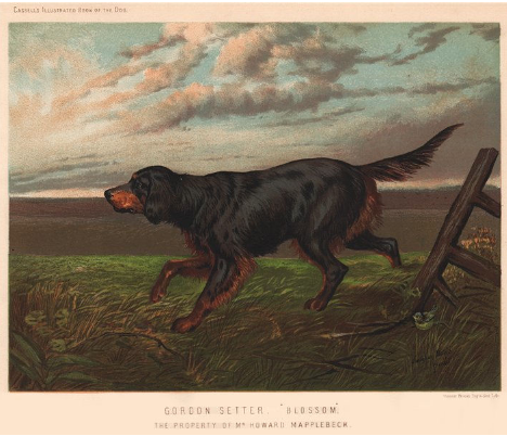 A water colour painting of a Gordon Setter belonging to Howard Mapplebeck