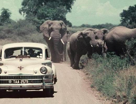 Motoring in the KNP in the fifties