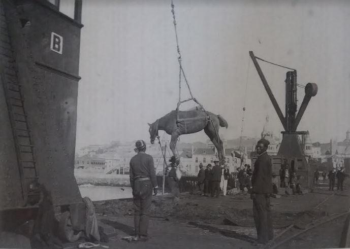 Offloading horses in Port Elizabeth Harbour during the Anglo Boer War