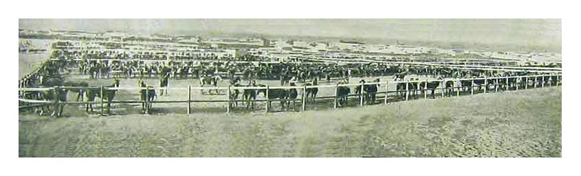 This Depot was for the horses offloaded at Port Elizabeth's harbour for use by British troops during the Boer War