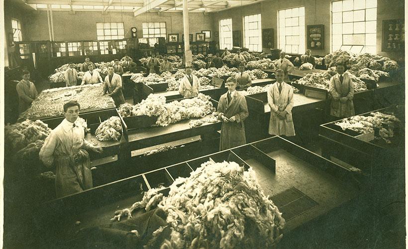 Wool sorting