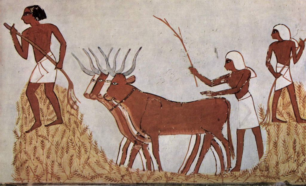 Farmers with wheat and cattle - Ancient Egyptian art 1,422 BCE