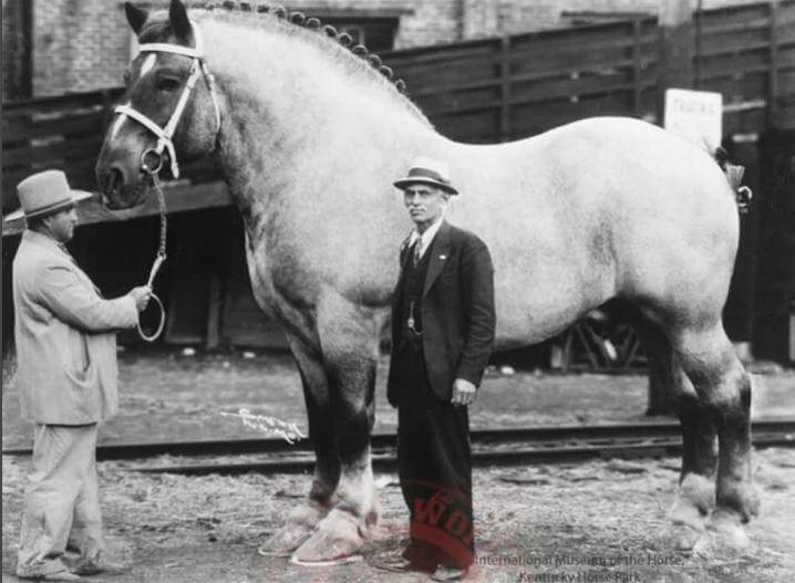 Brooklyn Supreme, the world's biggest horse