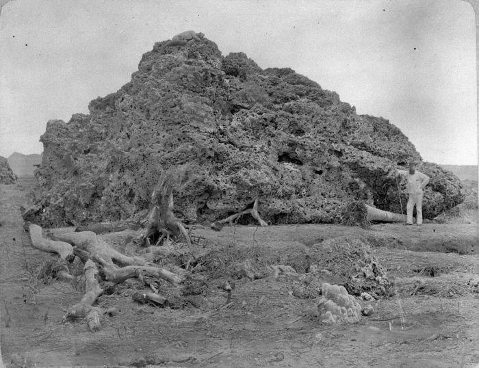 COLLECTIE_TROPENMUSEUM_Groot_brok_koraal_uit_zee_dat_bij_Anjer_op_land_is_geworpen_na_de_uitbarsting_van_de_Krakatau_in_1883._TMnr_60005541