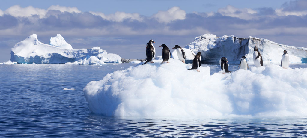 Quintessential Antartica with ice and penguins