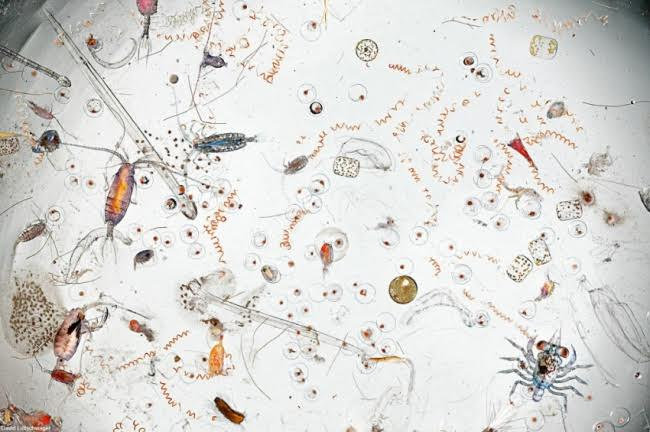A single drop of seawater magnified 25 times