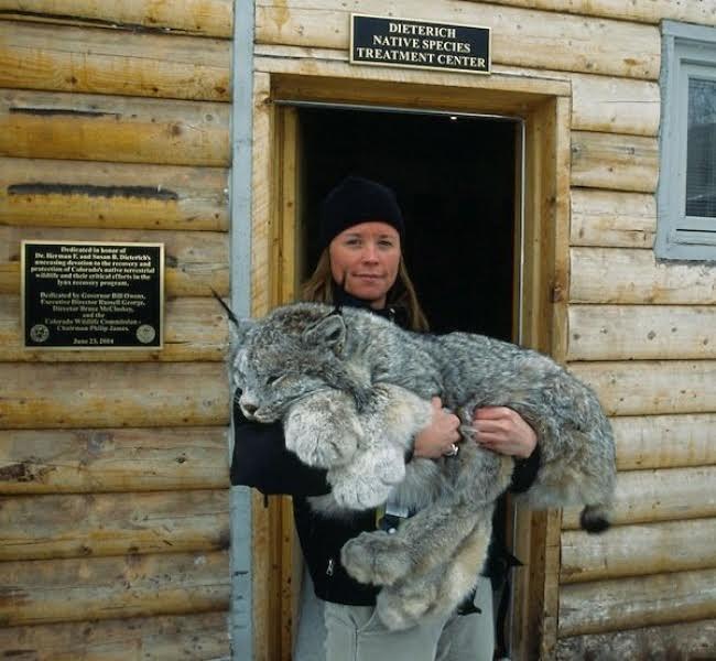 A tundra cat?