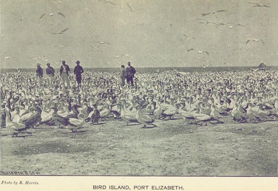 Bird Island in 1894