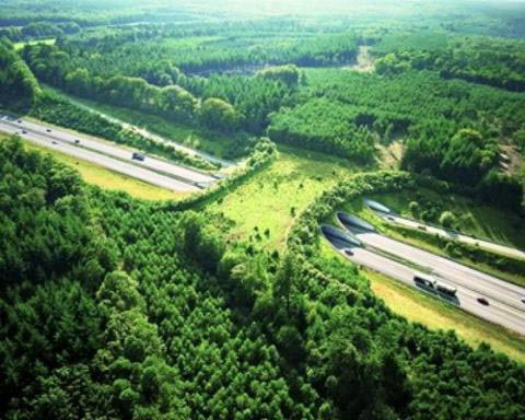 Highway A50 in The Netherlands