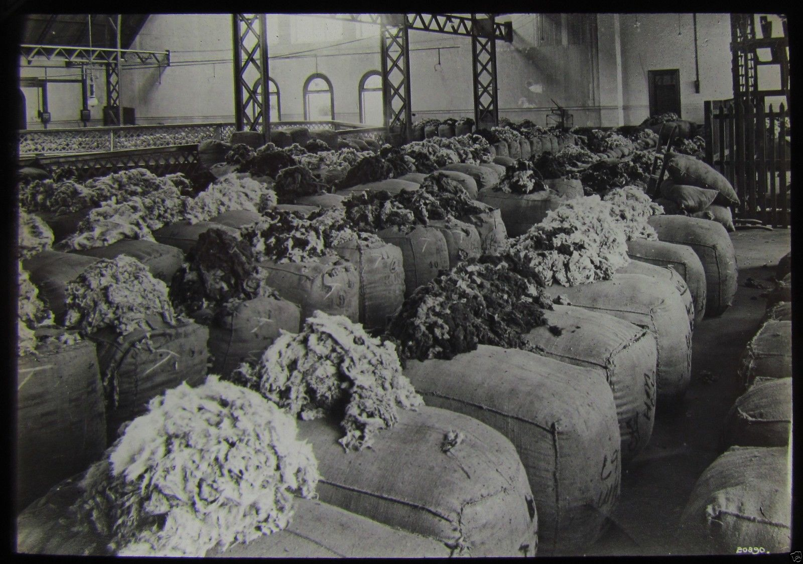Wool for export